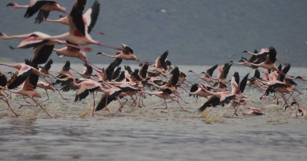flamingos-2042905_1920-1030x684