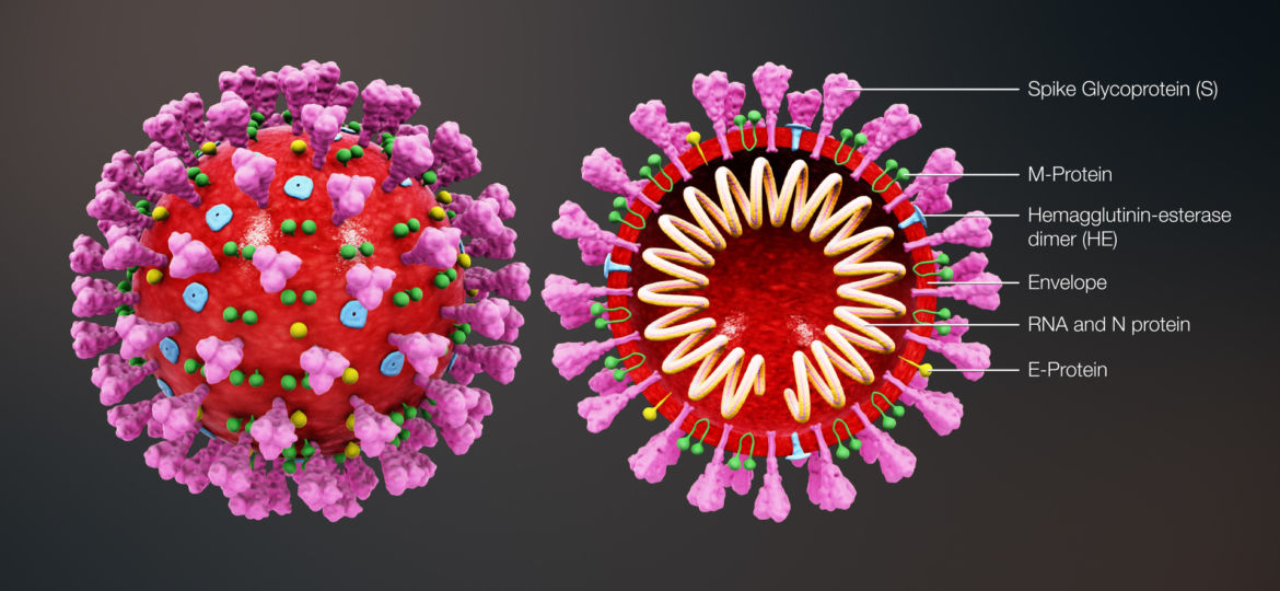 3D_medical_animation_coronavirus_structure